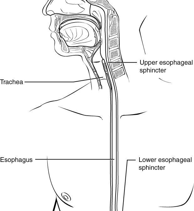 What Is Eosinophilic Esophagitis?