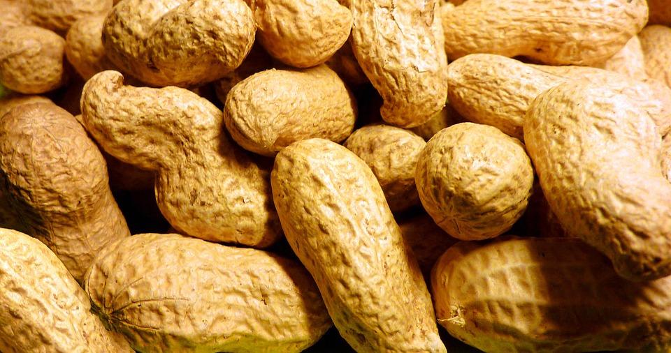 Peanut Allergy AR101 Oral Immunotherapy